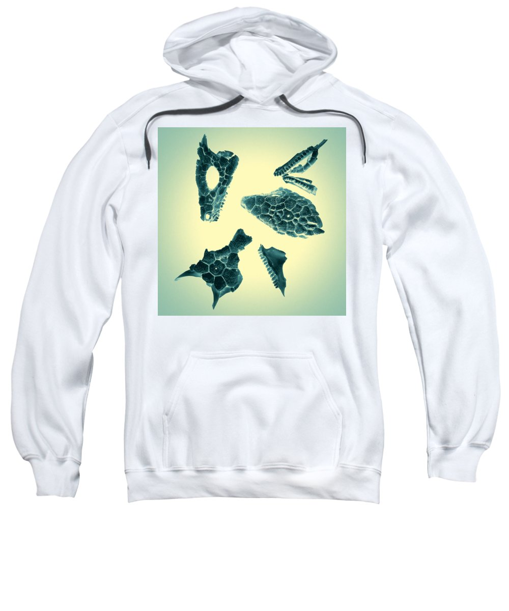 Scan Sweatshirt featuring the photograph Archaeopteryx by Wayne Sherriff