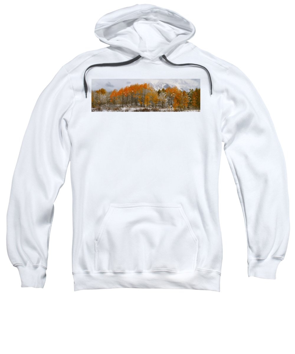 Trees Sweatshirt featuring the photograph Aspen Grove Along The Snake River Grand Teton National Park by Ed Riche