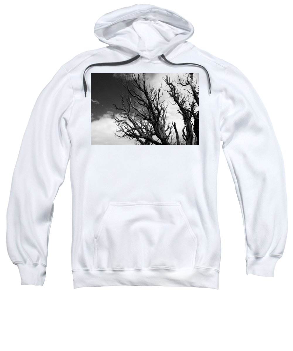 Pine Sweatshirt featuring the photograph At The End Of Time by Joe Kozlowski