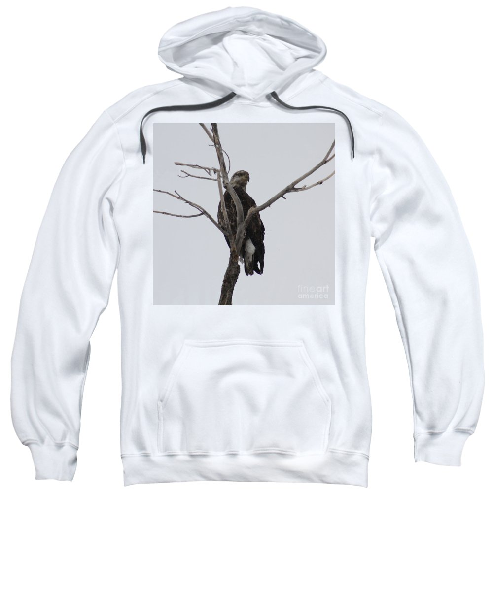Bald Eagle Sweatshirt featuring the photograph Baby Bald Eagle by Brandi Maher