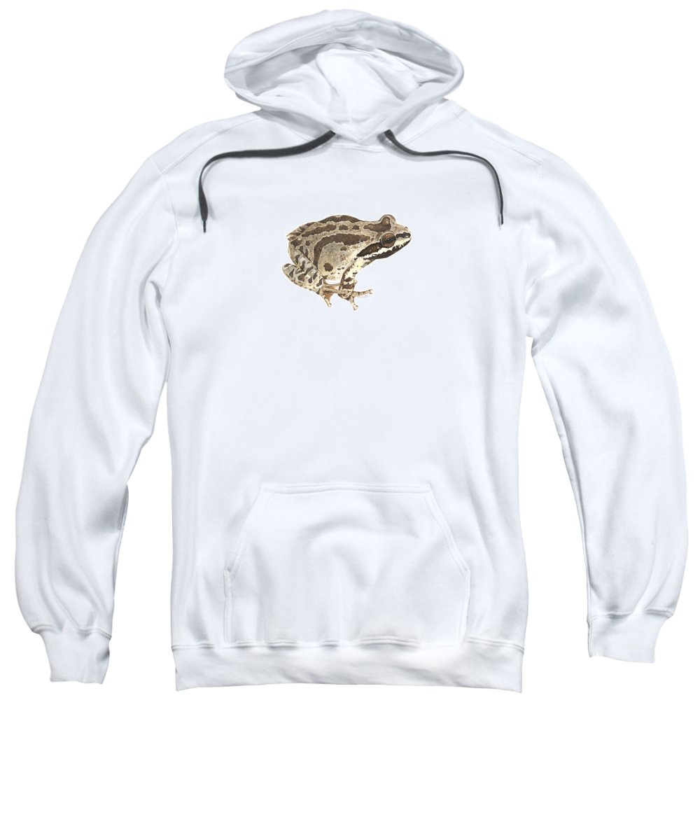 Treefrog Sweatshirt featuring the painting Baja California Treefrog by Cindy Hitchcock