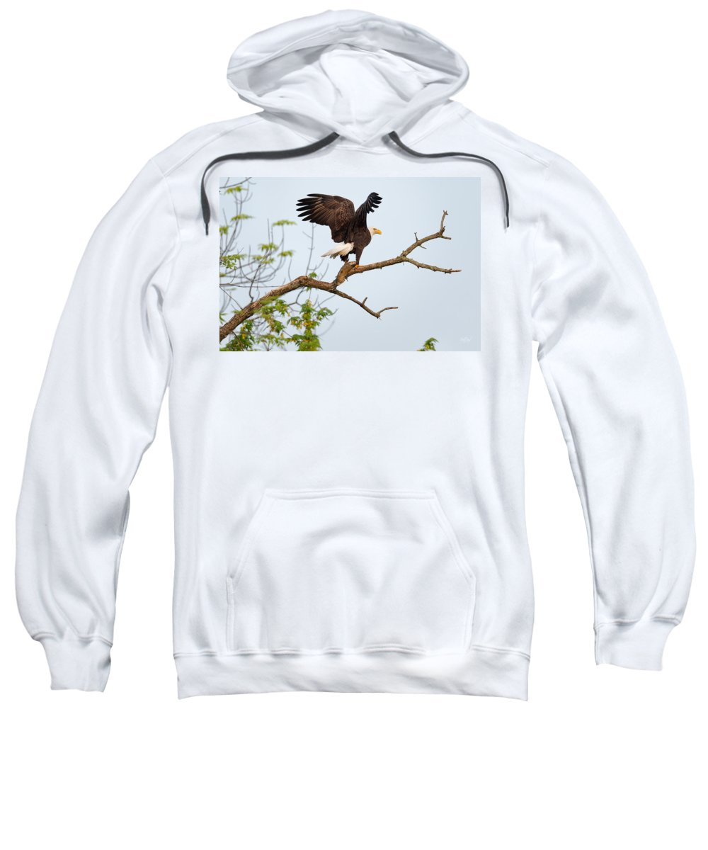 Bald Eagle Sweatshirt featuring the photograph Bald Eagle With Fish by Everet Regal