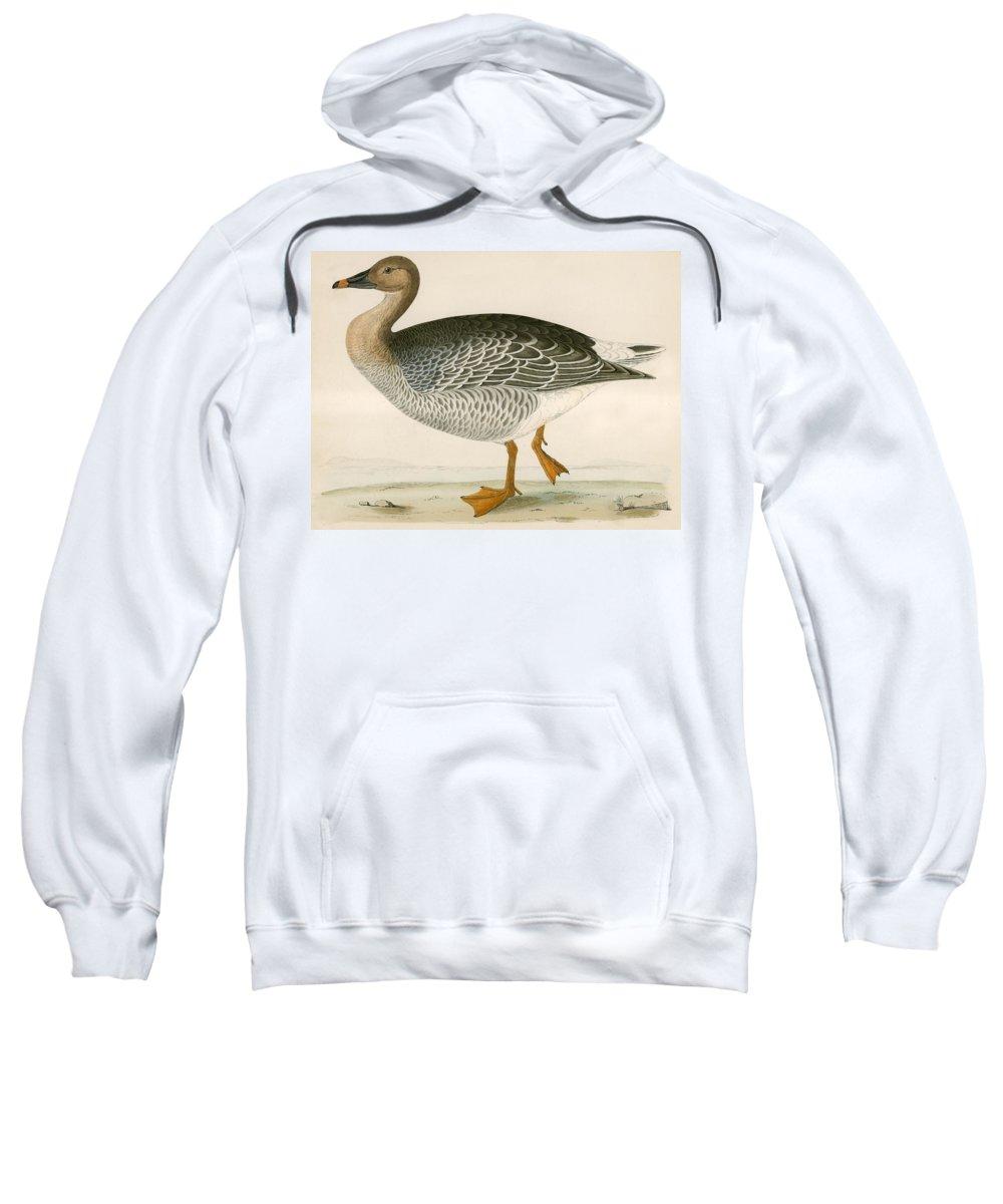 Birds Sweatshirt featuring the photograph Bean Goose by Beverley R. Morris
