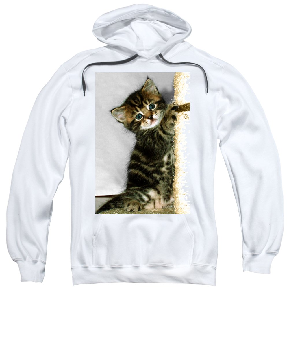 Kitten Sweatshirt featuring the photograph Benny The Kitten Playing by Terri Waters