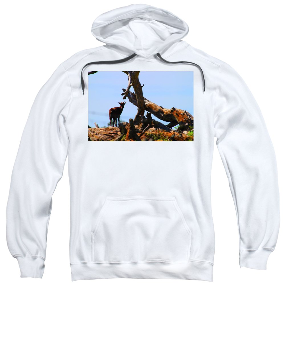 Upcountry Maui Sweatshirt featuring the photograph Billy The Goat by Pharaoh Martin