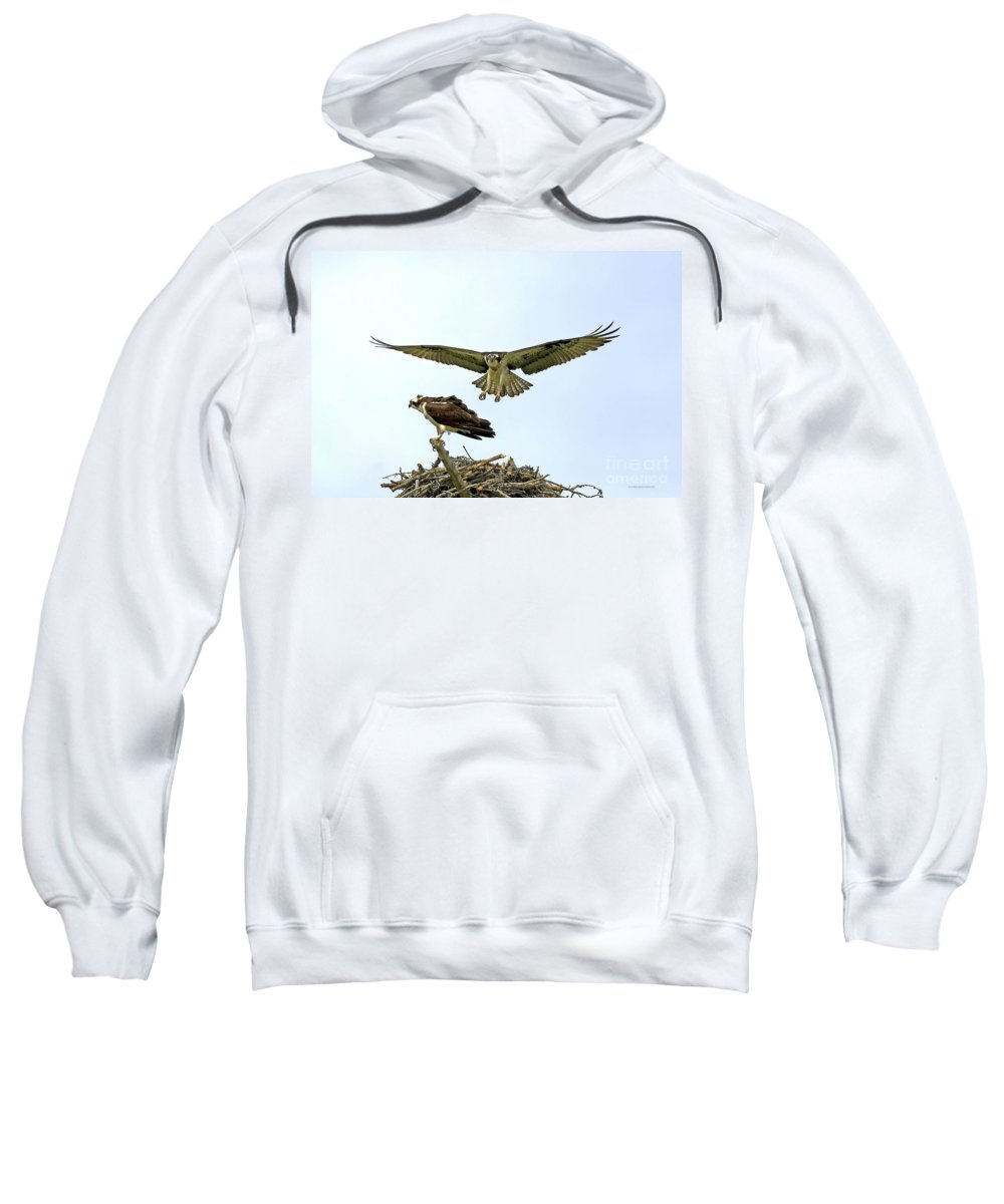 Birds Sweatshirt featuring the photograph Birds Of Prey by Deborah Benoit