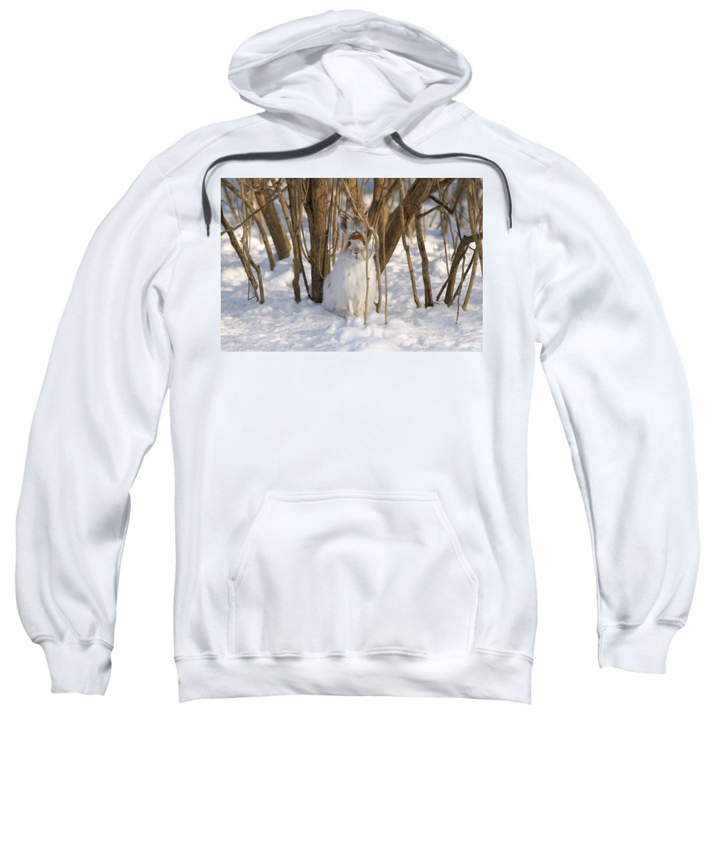 Winter Sweatshirt featuring the photograph Blending In by Heather Pickard