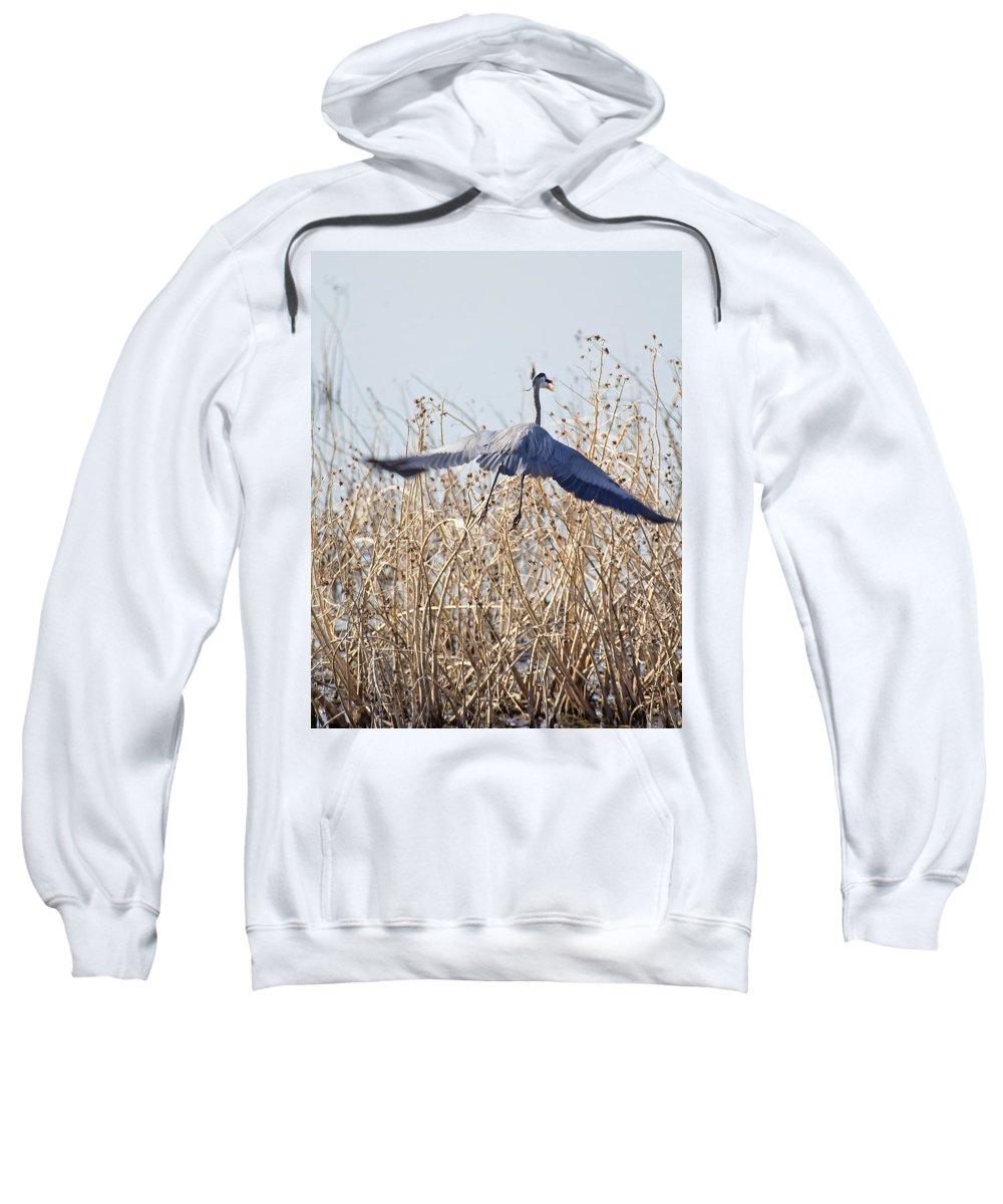 Blue Heron Sweatshirt featuring the photograph Blue Heron by Deb Buchanan