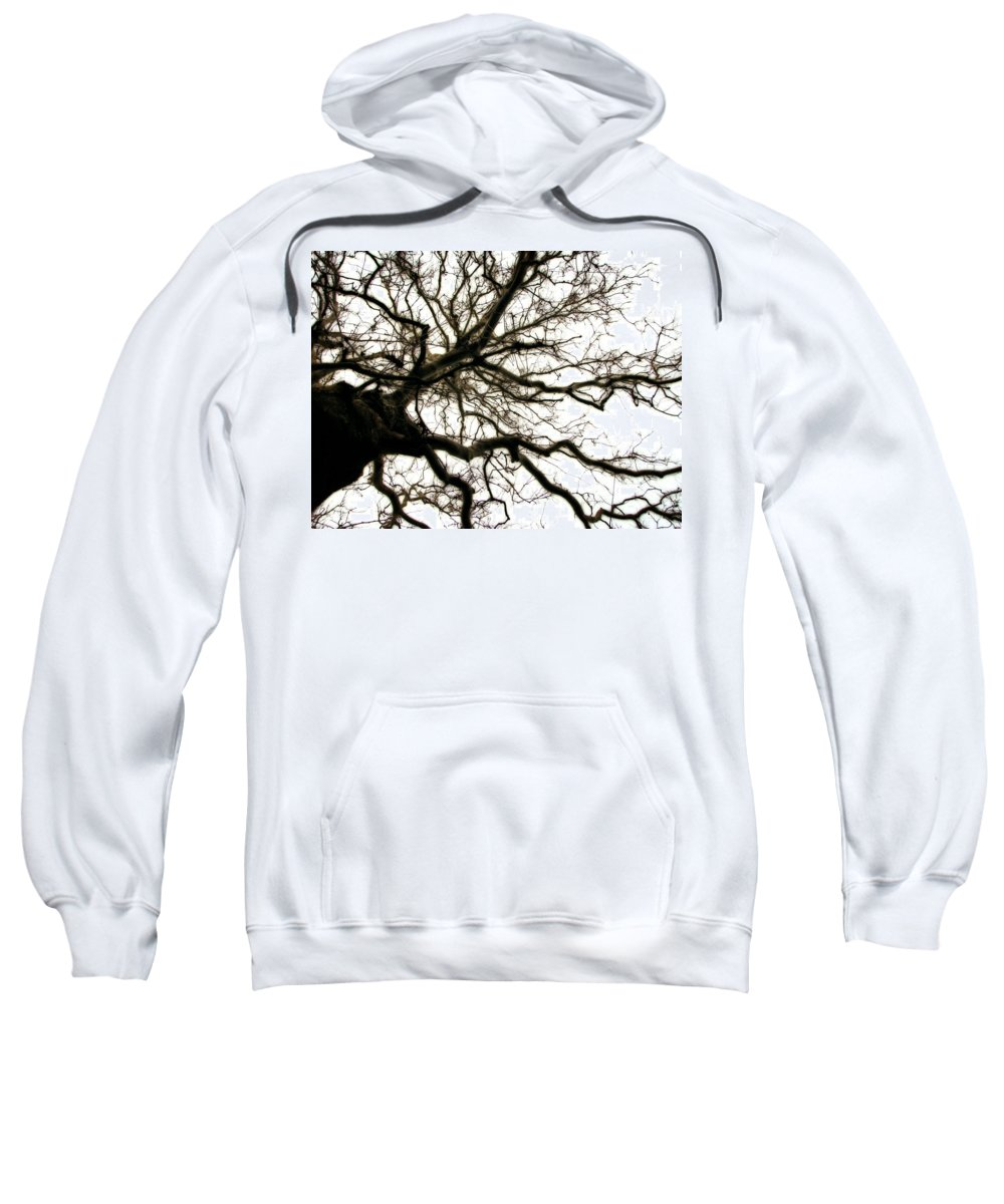 Branches Sweatshirt featuring the photograph Branches by Michelle Calkins
