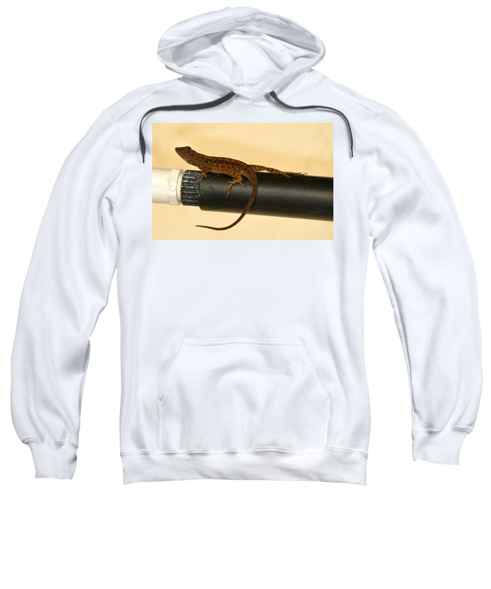 Florida Sweatshirt featuring the photograph Brown Anole On Pipe by Richard Bryce and Family