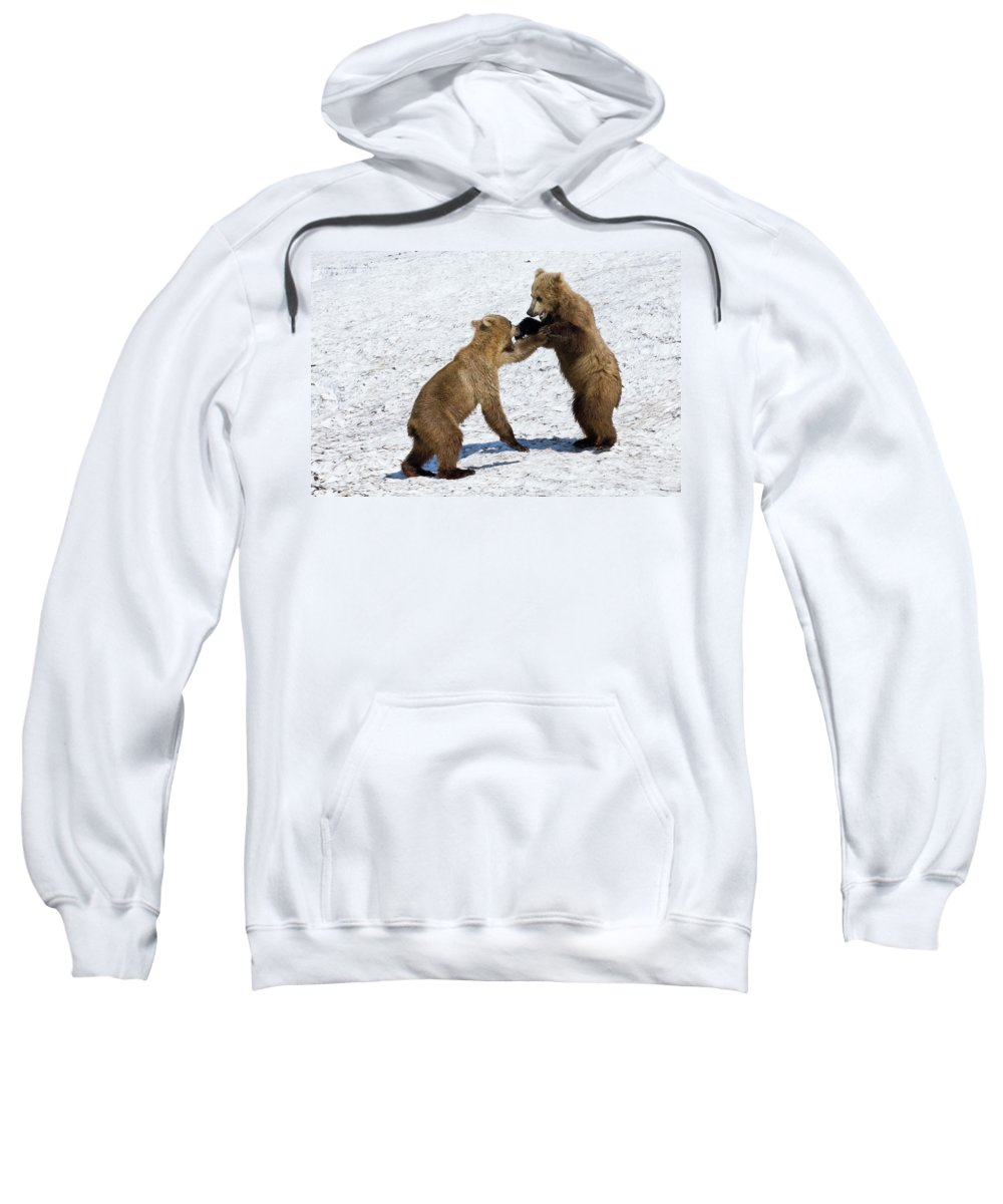 Baby Sweatshirt featuring the photograph Brown Bear Ursus Arctos Cubs Play by Sergey Gorshkov