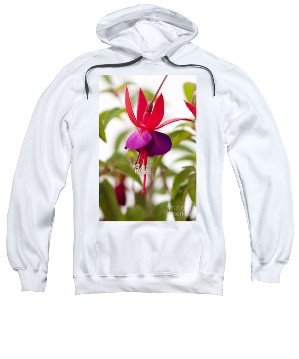 Floral Sweatshirt featuring the photograph Brutus by Anne Gilbert