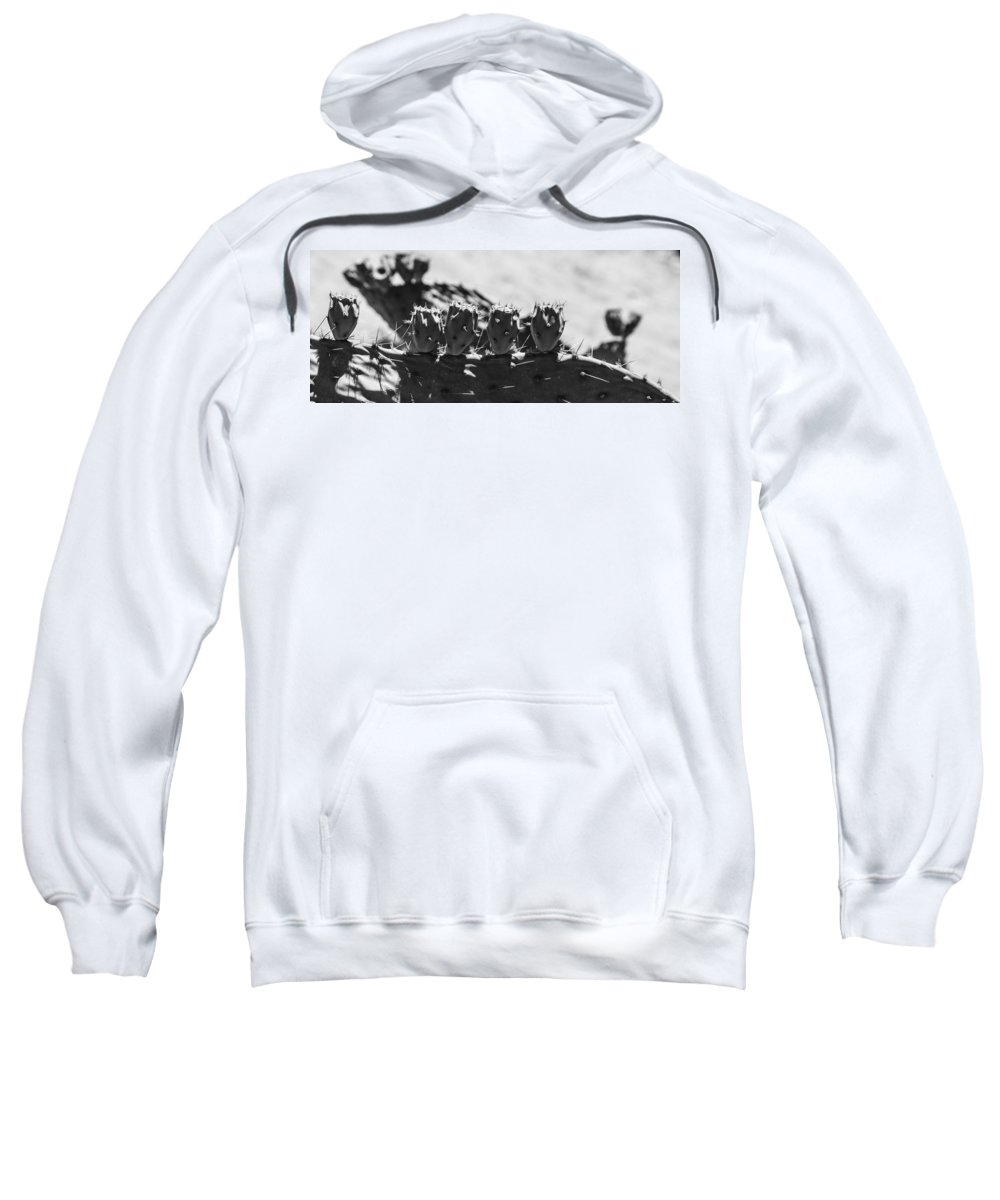 Route 66 Sweatshirt featuring the photograph Cactus Nubs by Angus Hooper Iii