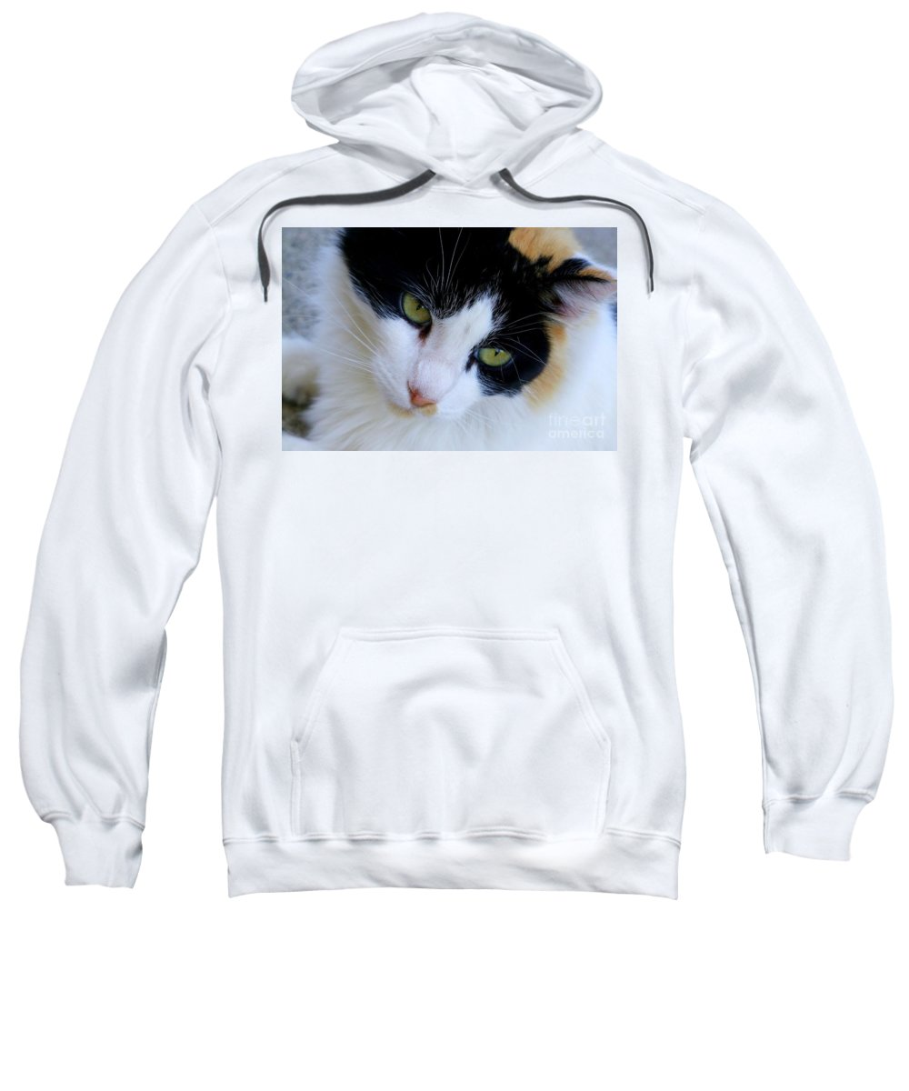 White Sweatshirt featuring the photograph Calico 1 by Mary Deal