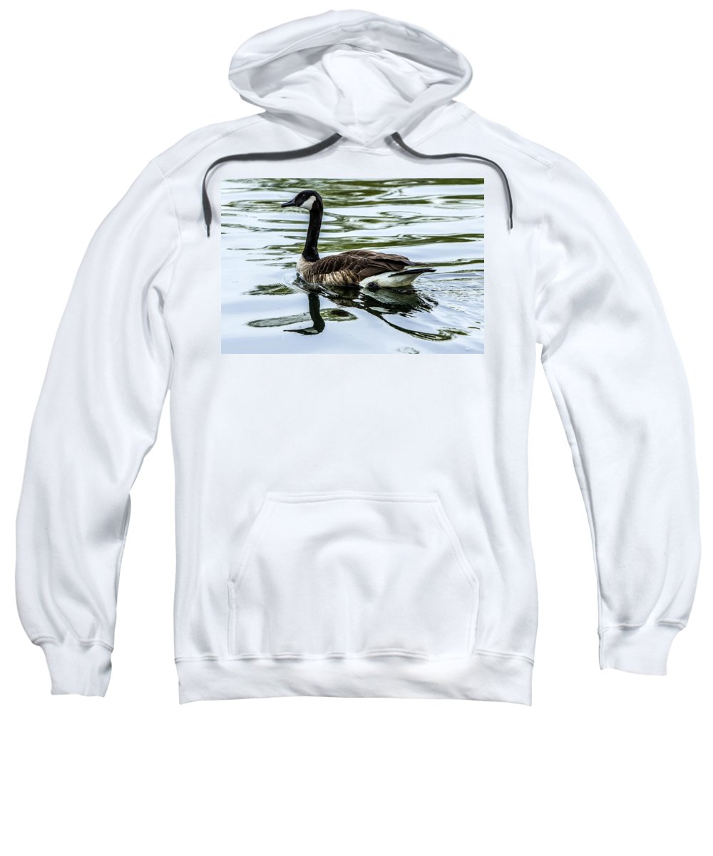 Goose Sweatshirt featuring the photograph Canada Goose by Diana Powell