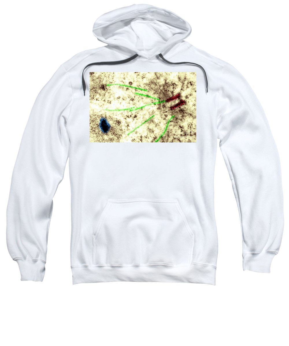 Histology Sweatshirt featuring the photograph Centriole, Spindle Fibers, Chromosomes by Biology Pics