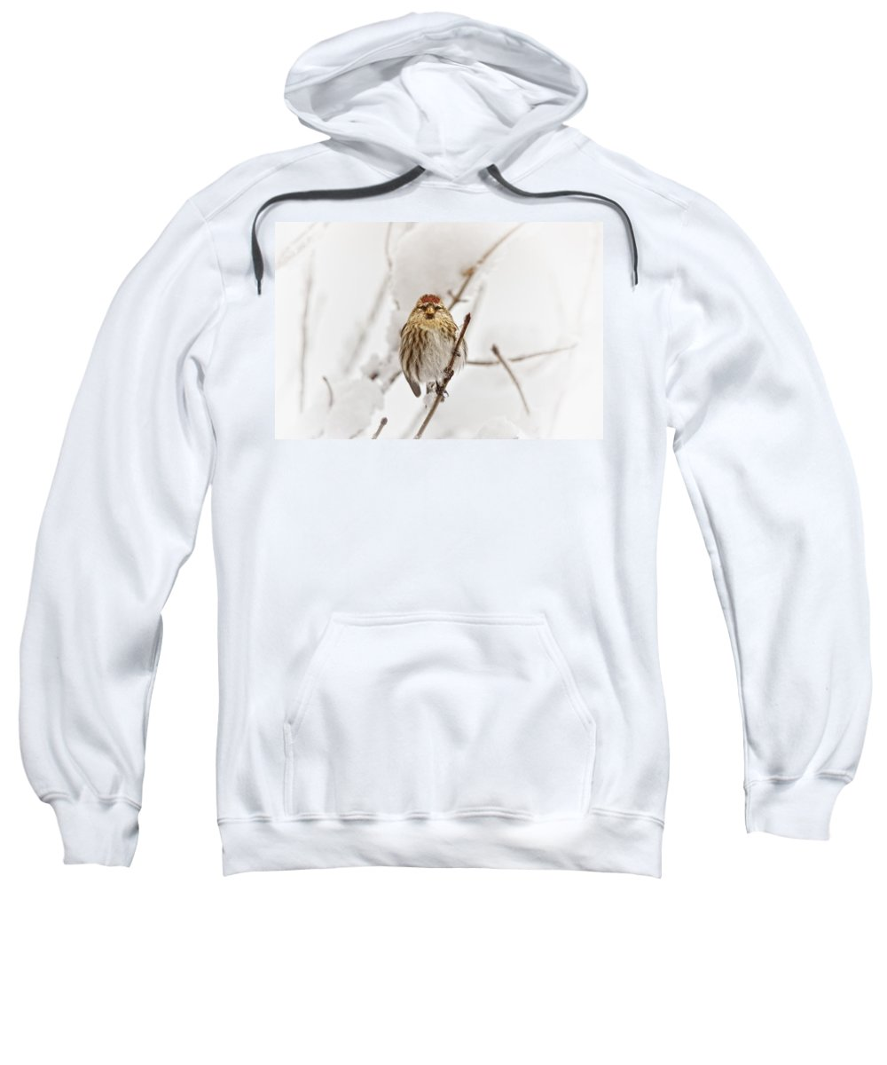Birds Sweatshirt featuring the photograph Common Redpoll by Susan Capuano