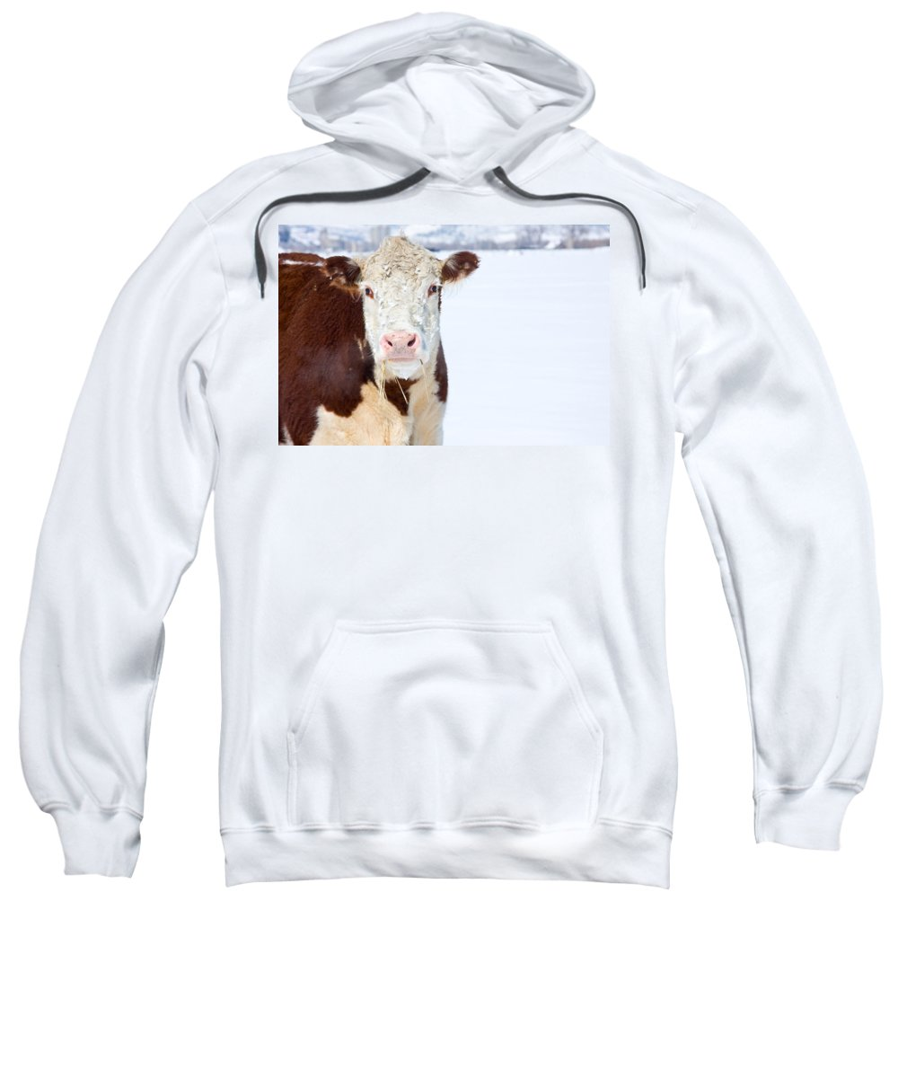 Cow Sweatshirt featuring the photograph Cow - Fine Art Photography Print by James BO Insogna