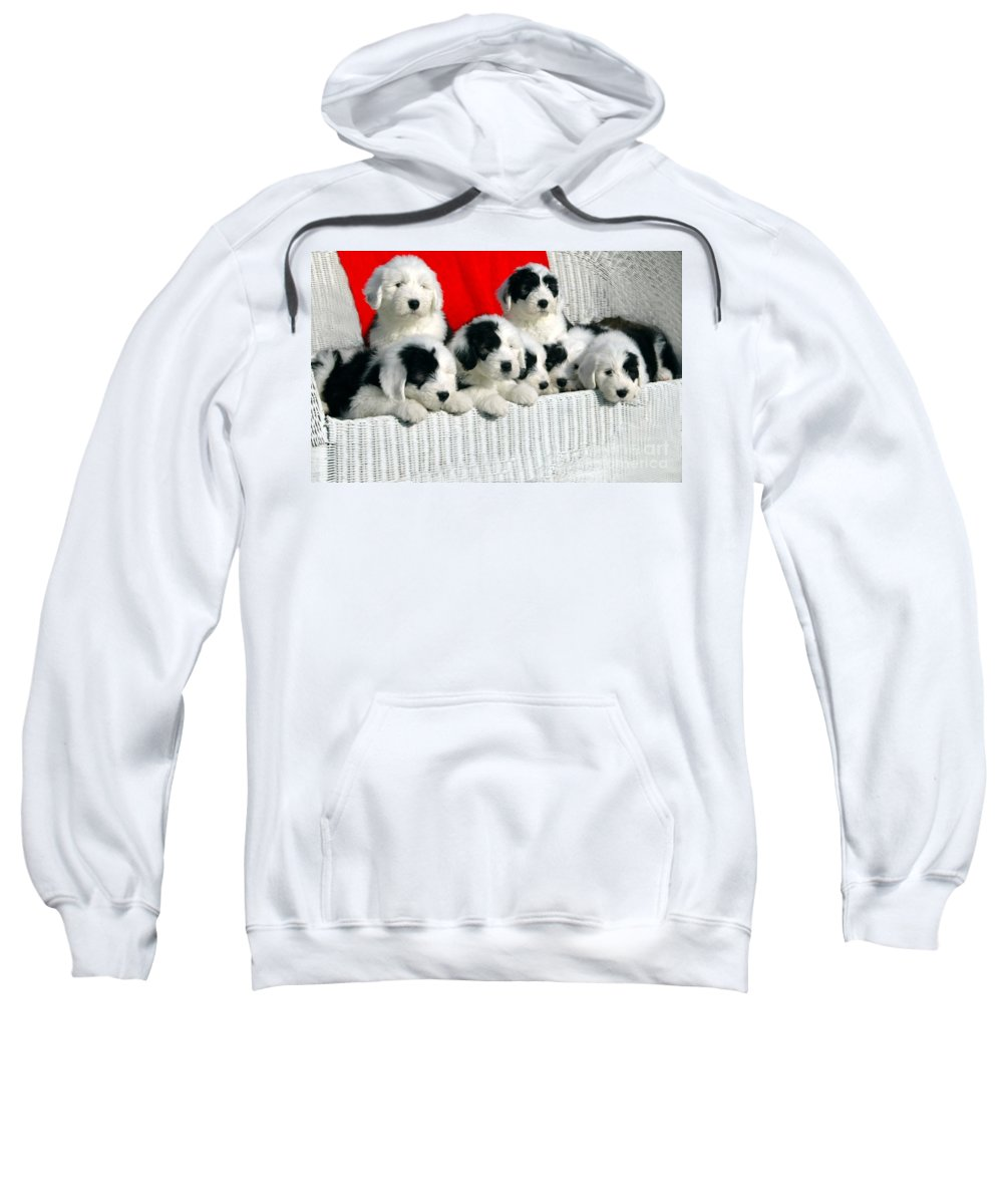 Old Sweatshirt featuring the photograph Cute Puppies by Kathleen Struckle