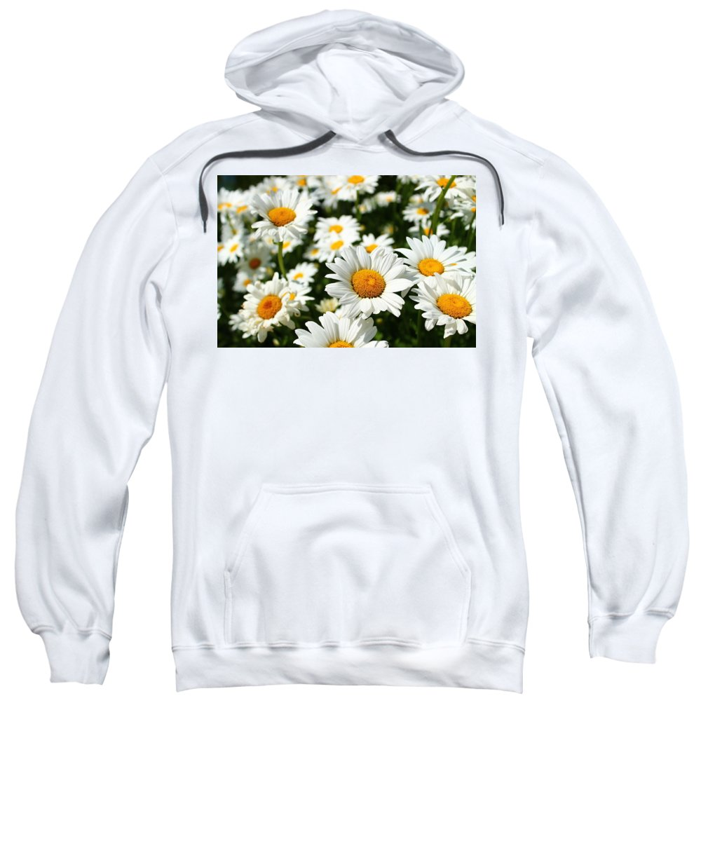 Daisies Sweatshirt featuring the photograph Daisy Day by Catie Canetti
