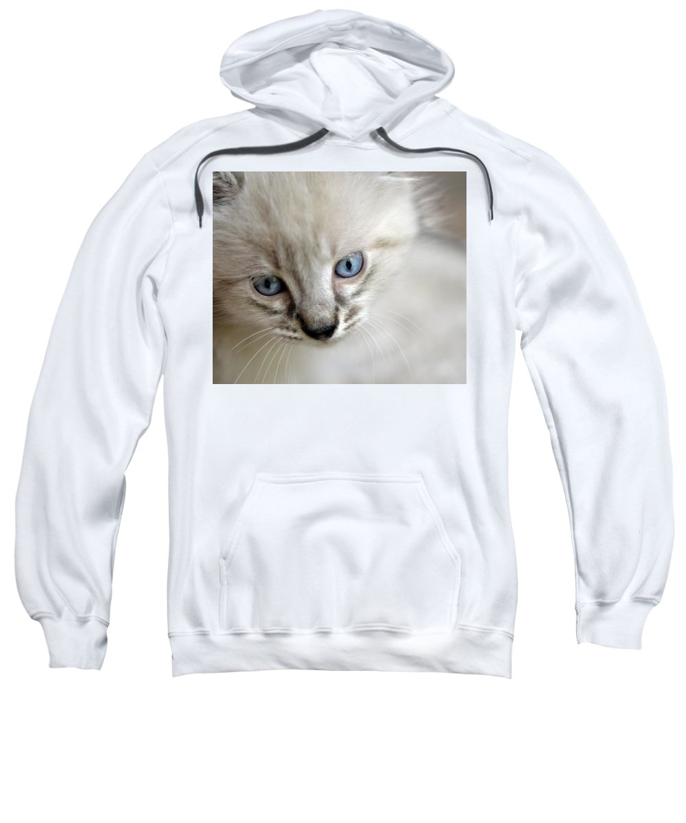 Kitten Sweatshirt featuring the photograph Day Dreaming by Susan Leggett