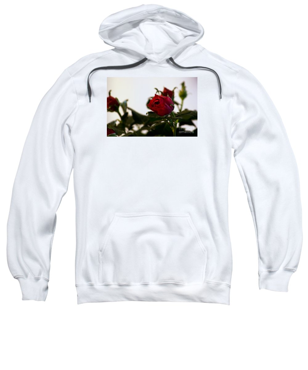Roses Sweatshirt featuring the photograph Deep Red Roses by Robin Lynne Schwind
