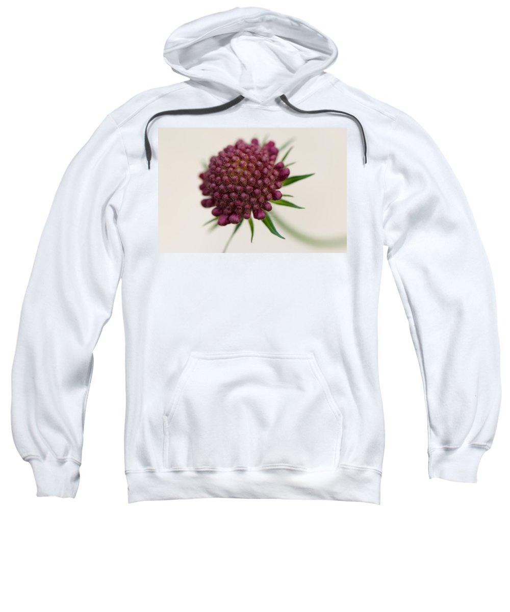 Interior Design Sweatshirt featuring the photograph Demure by Lisa Knechtel