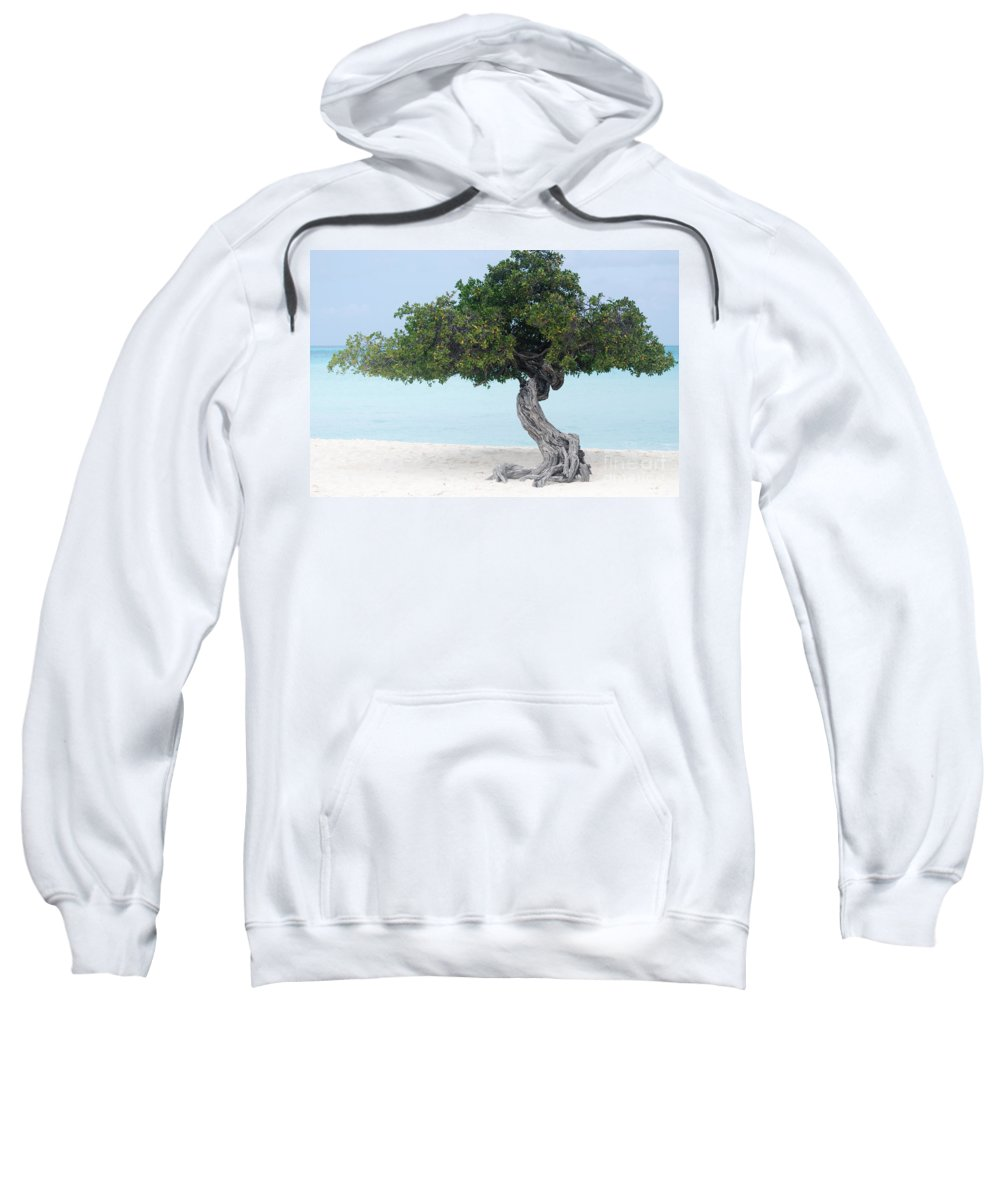 Aruba Sweatshirt featuring the photograph Divi Divi Tree In Aruba by DejaVu Designs