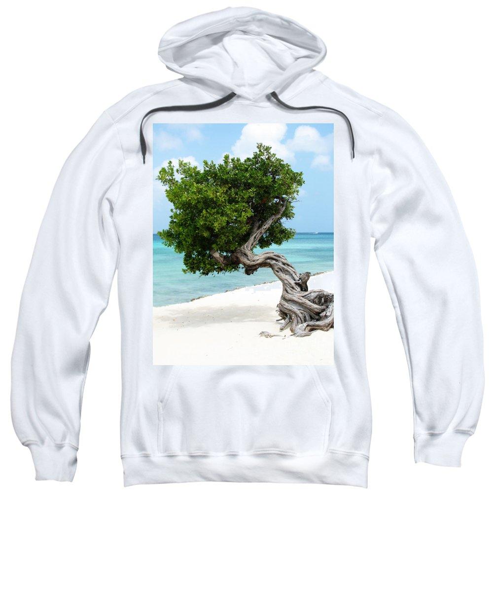 Aruba Sweatshirt featuring the photograph Divi Divi Tree In Aruba by DejaVu Designs
