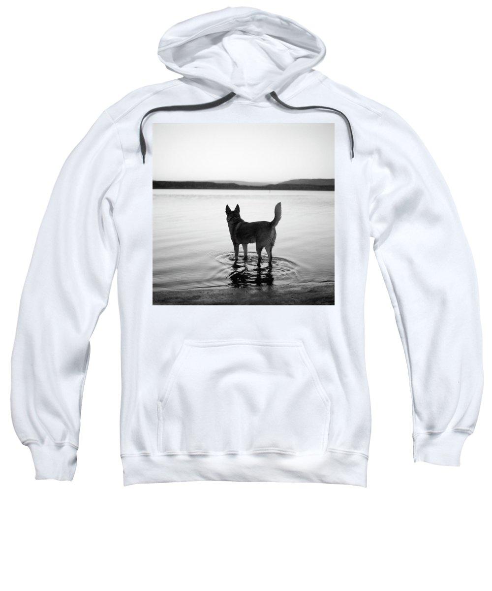Abiquiu Sweatshirt featuring the photograph Dog Looking Over Abiquiu Reservior by Ryan Heffernan