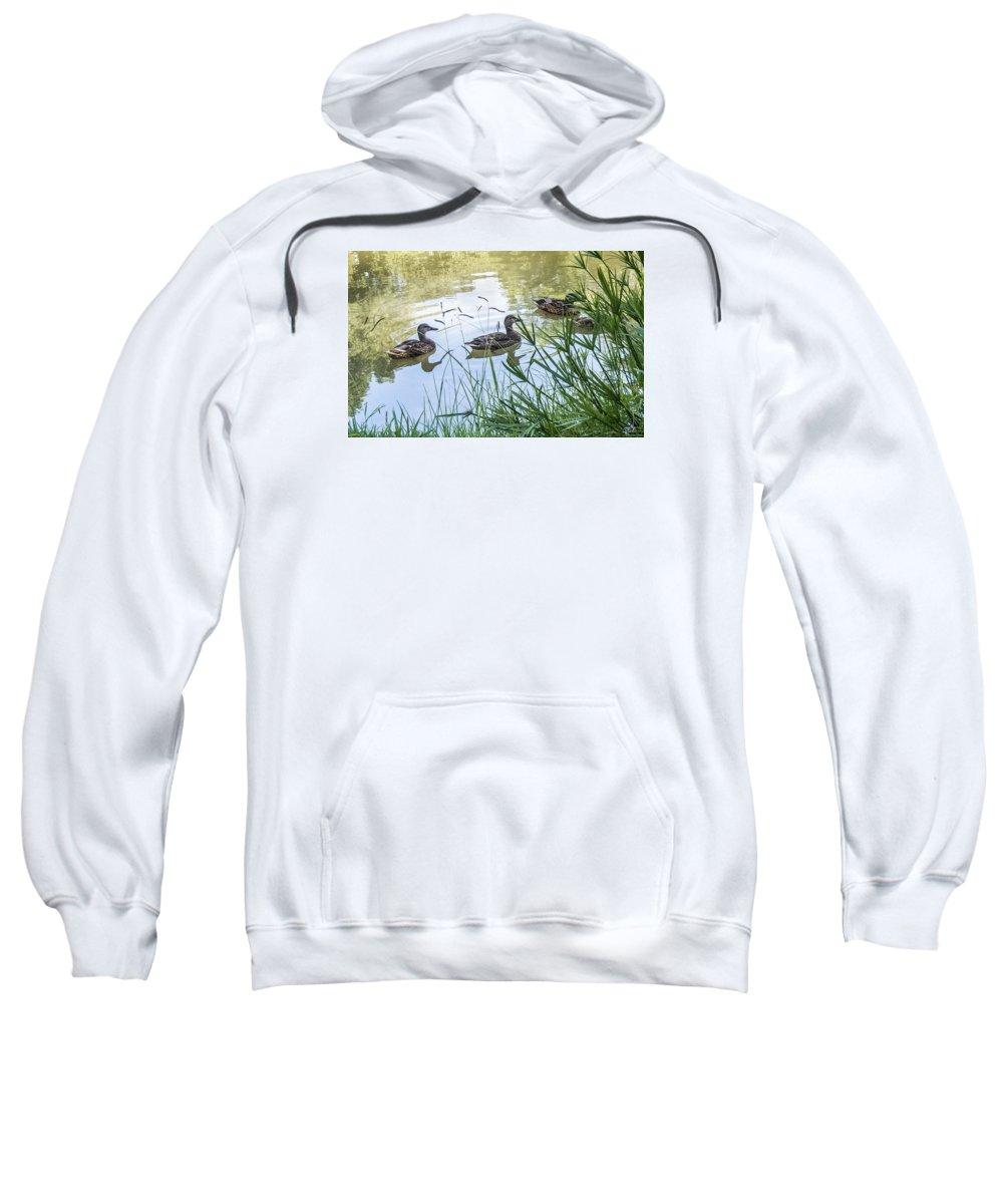 Ducks Sweatshirt featuring the photograph Ducks by Susan Eileen Evans