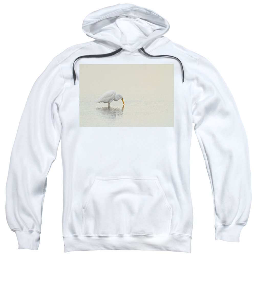 Great Egret Sweatshirt featuring the photograph Egret Finds Himself by Karol Livote