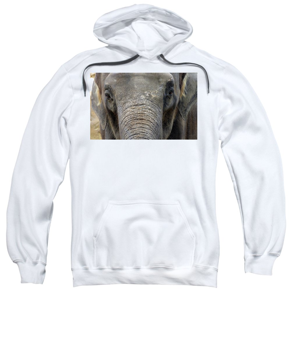 Elephant Sweatshirt featuring the photograph Elephant Close Up 1 by Tom Conway
