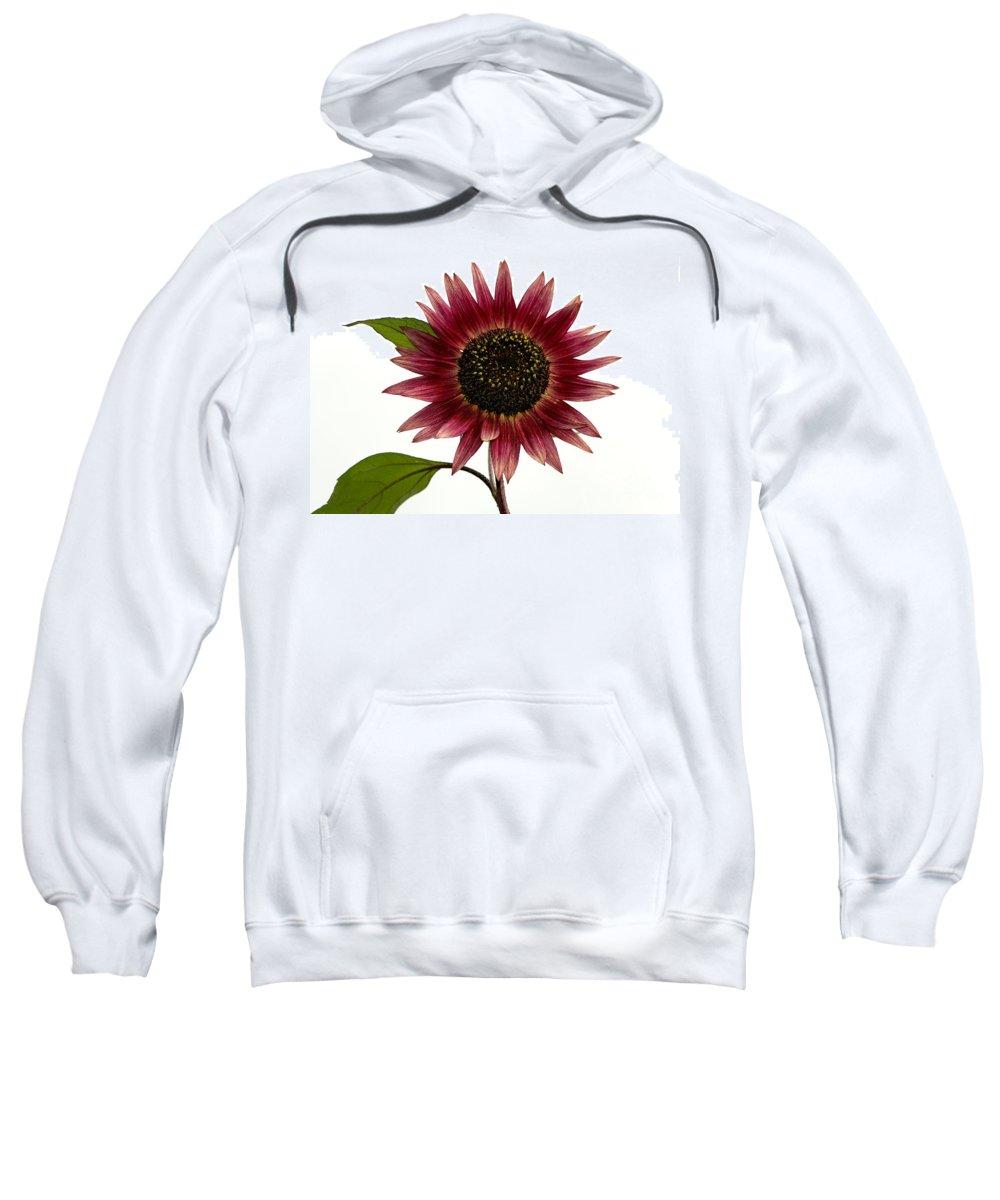 Evening Sun Sunflower Sweatshirt featuring the photograph Evening Sun Sunflower 2 by Sharon Talson