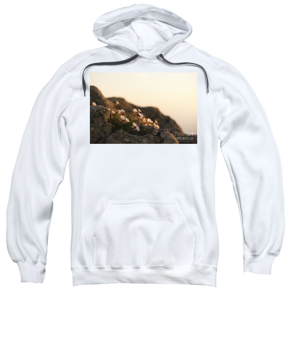 Background Sweatshirt featuring the photograph Face The Light by Anne Gilbert