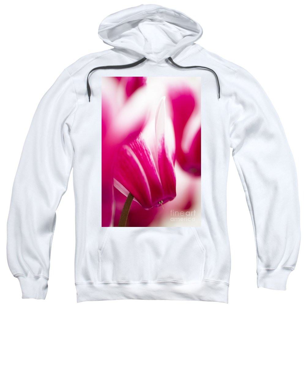 Abstract Sweatshirt featuring the photograph Fantasia by Anne Gilbert