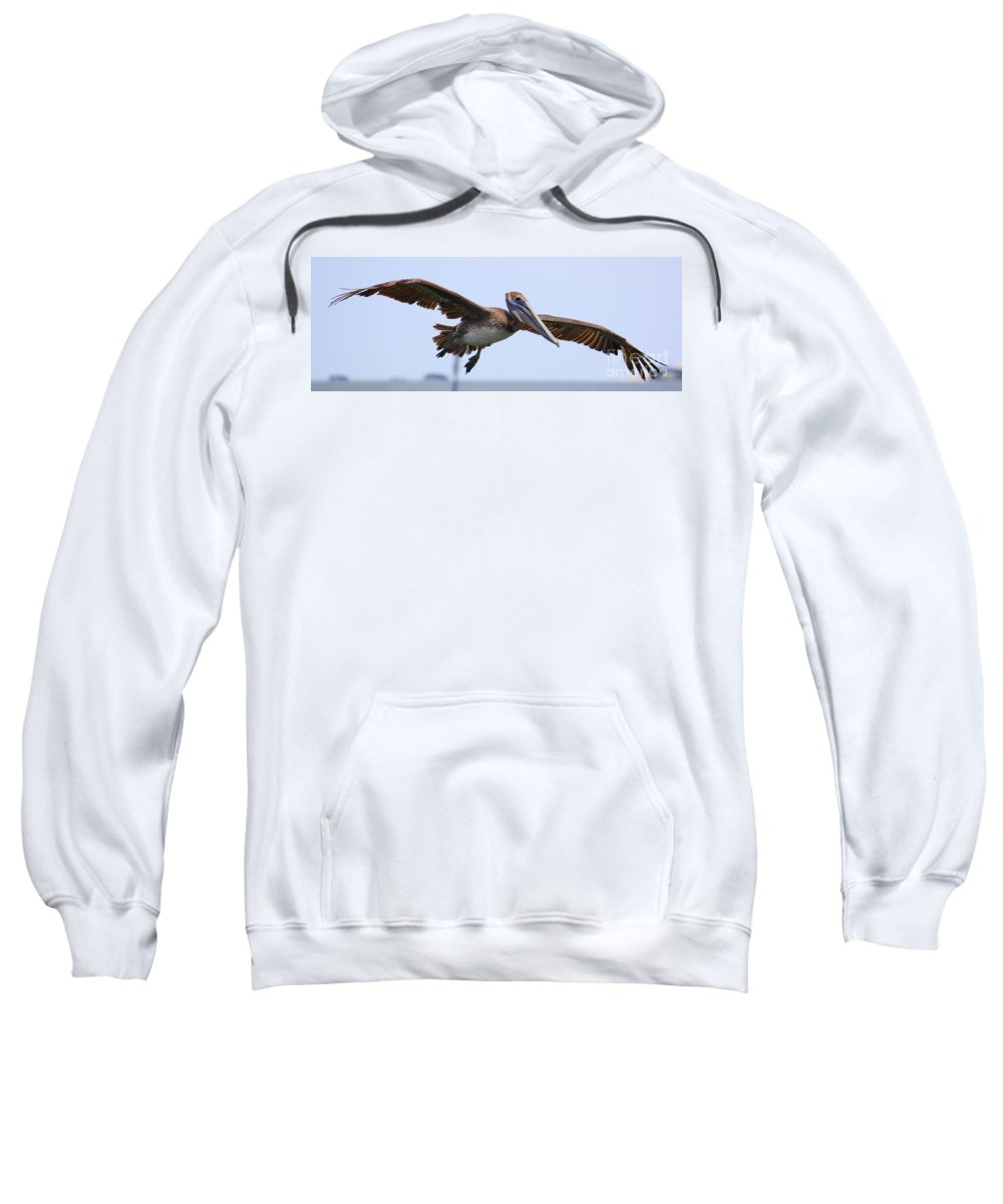 Pelican In Flight Sweatshirt featuring the photograph Flying Pelican Panorama by Carol Groenen