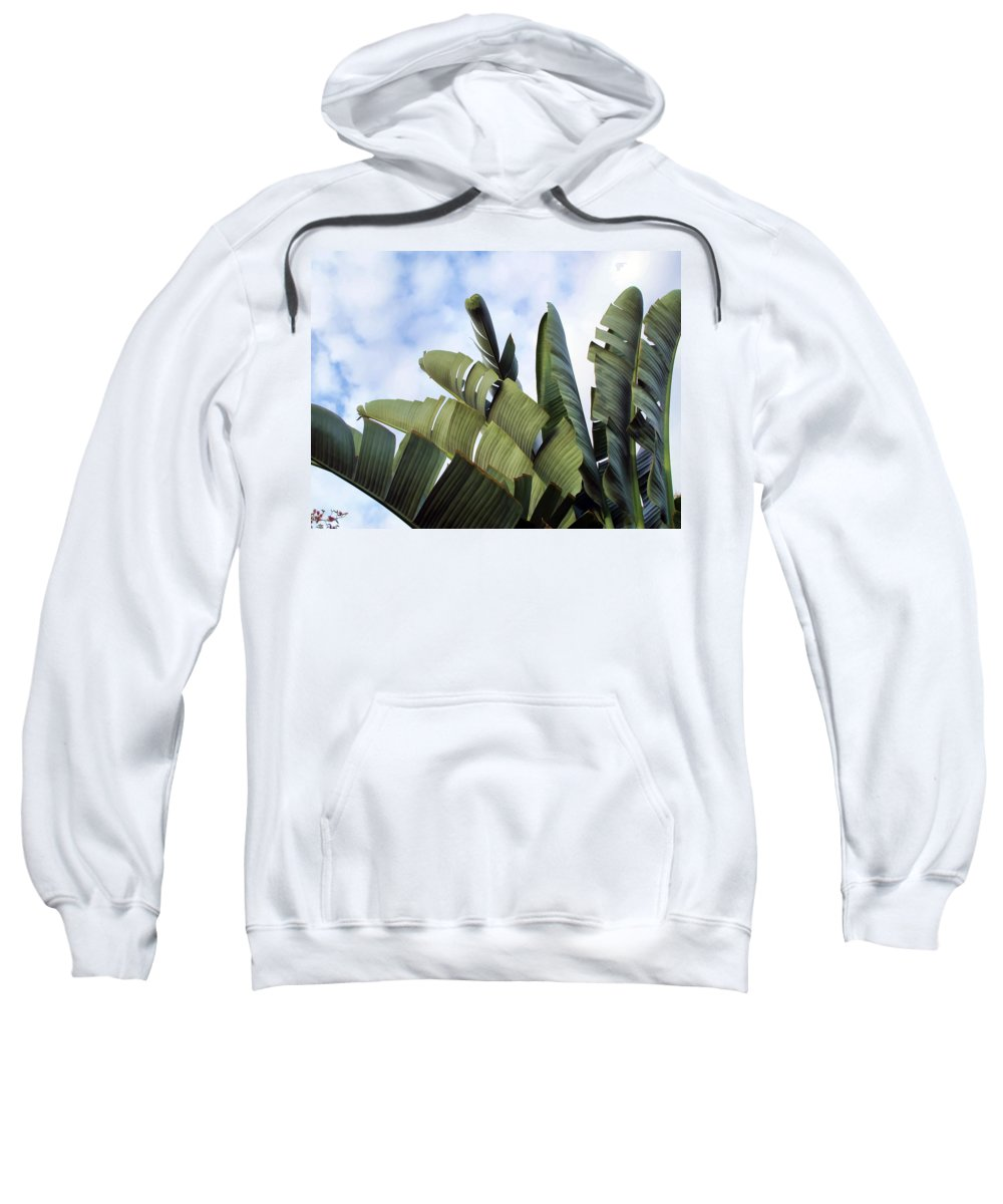 Plant Sweatshirt featuring the photograph Four Seasons 7 by Dawn Eshelman
