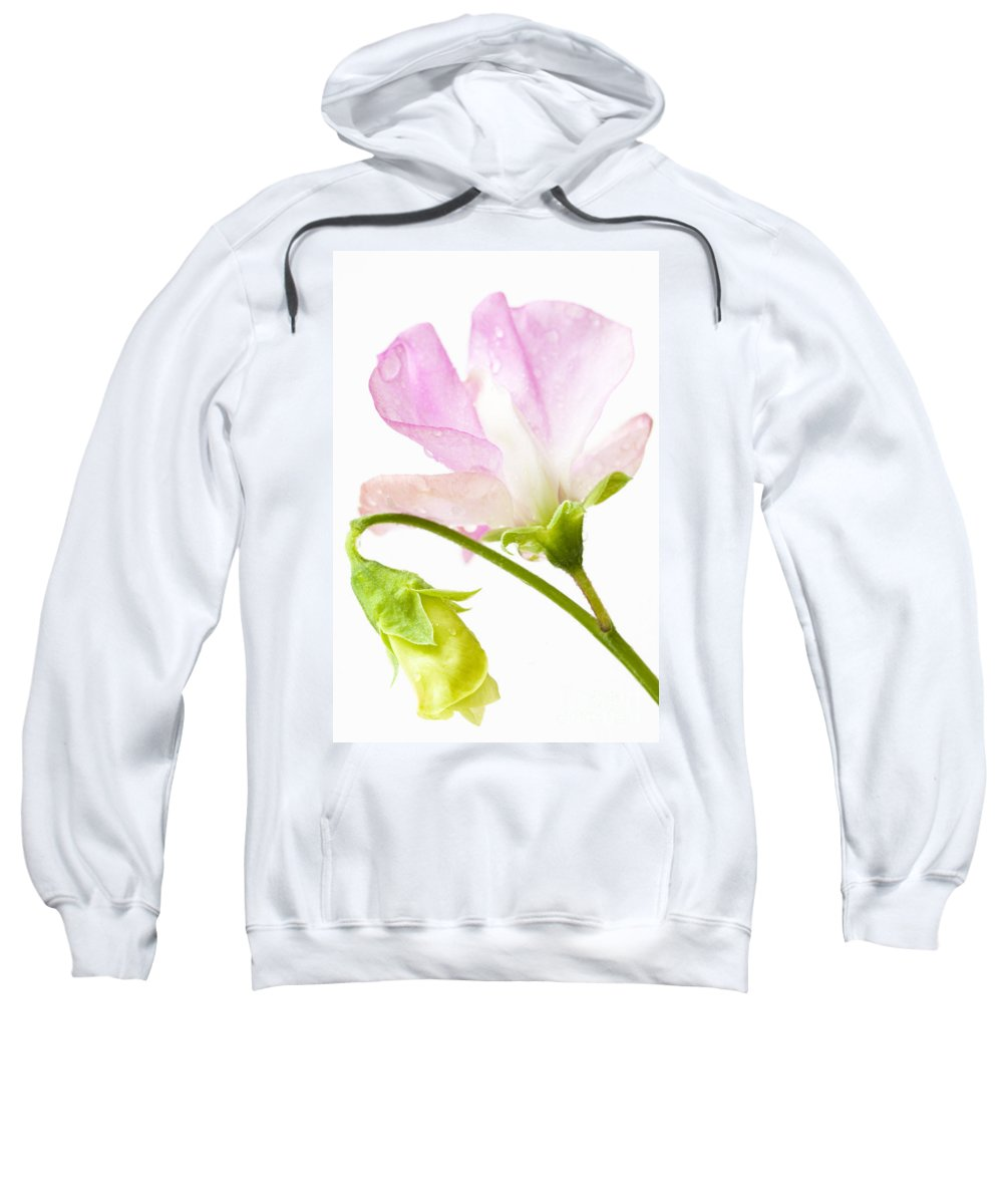 August Sweatshirt featuring the photograph Geranium Pink by Anne Gilbert