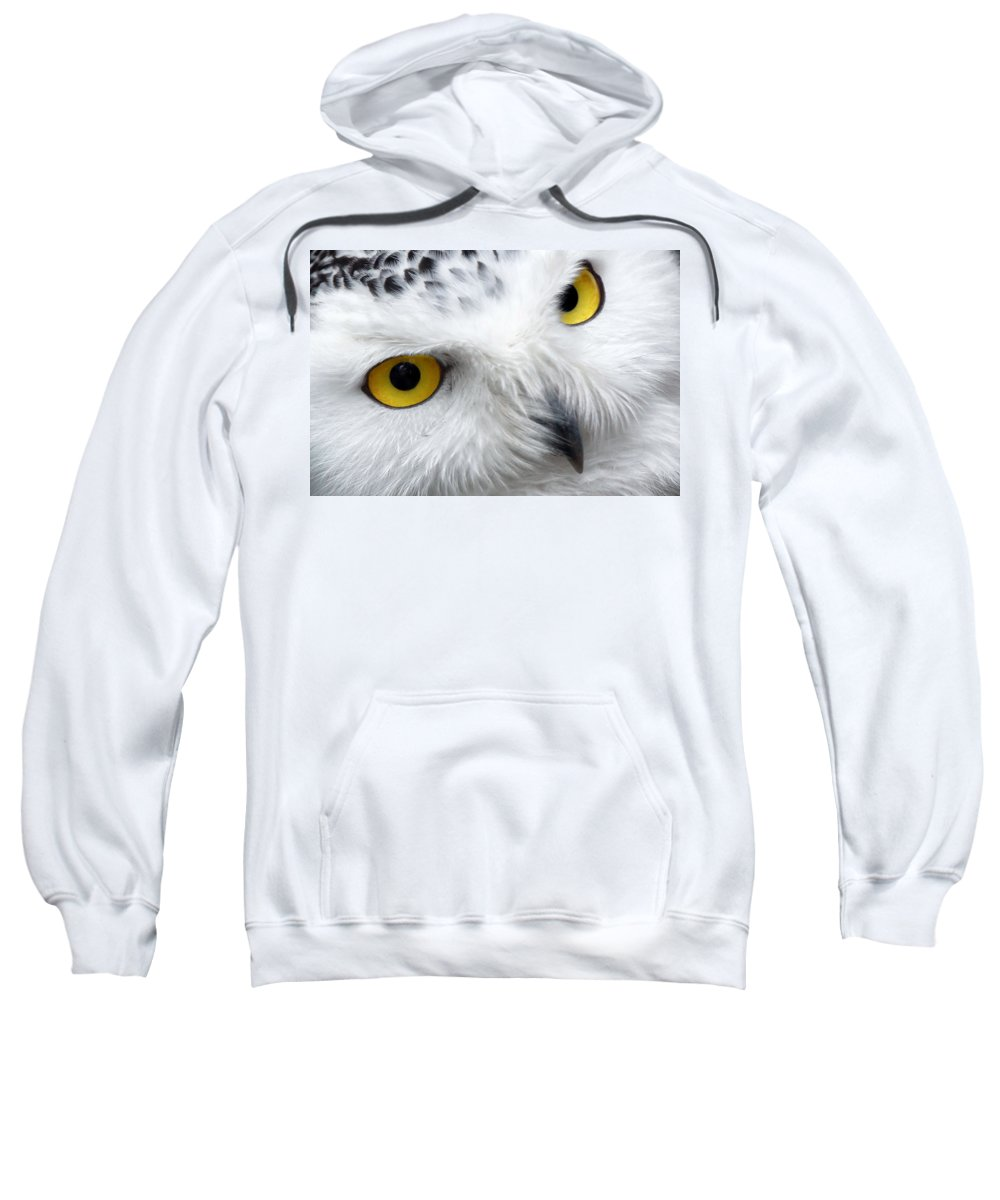 Owl Sweatshirt featuring the photograph Golden Eyes by Pixabay