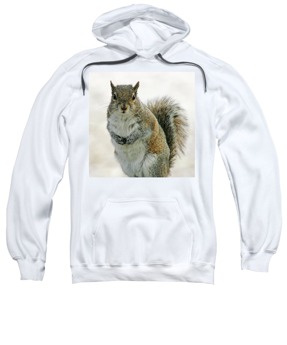 Nature Sweatshirt featuring the photograph Gray Squirrel by Cindi Ressler