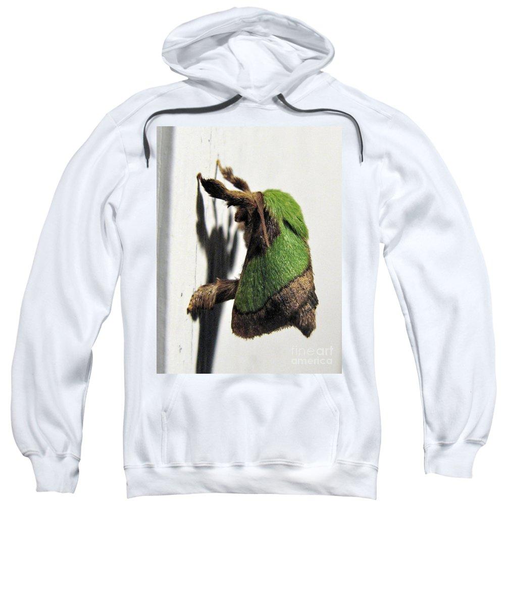Moths Sweatshirt featuring the photograph Green Hair Moth by Christopher Plummer