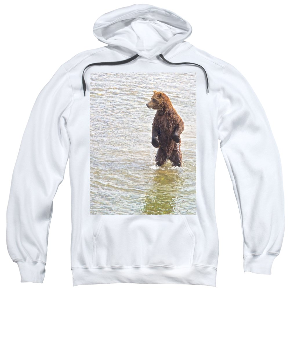 Grizzly Bear Standing To Get A Better Look Sweatshirt featuring the photograph Grizzly Bear Standing To Get A Better Look In The Moraine River In Katmai by Ruth Hager