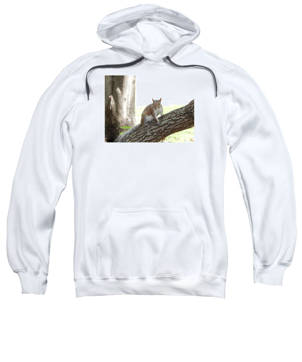 Florida Brown Squirrel In A Tree. Oak Tree Sweatshirt featuring the photograph Here's Lookin At You Kid by Terry Baker