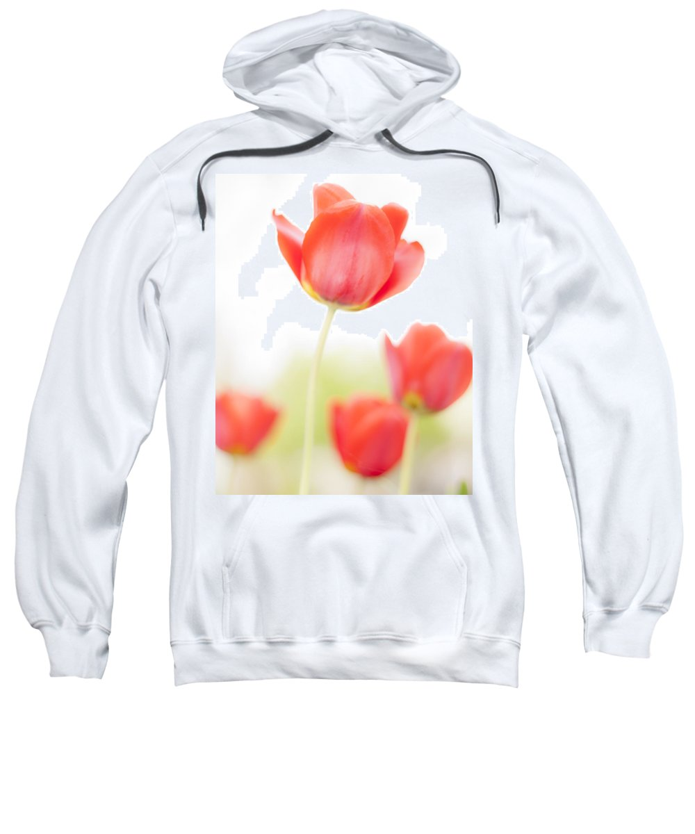 3scape Sweatshirt featuring the photograph High Key Tulips by Adam Romanowicz