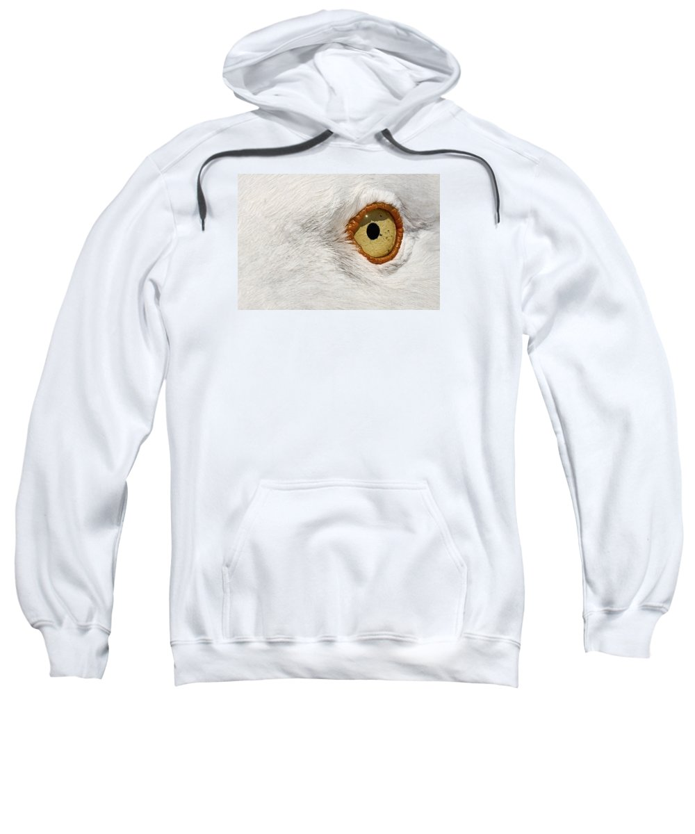 Animal Sweatshirt featuring the photograph I Have My Eye On You by Marcia Colelli