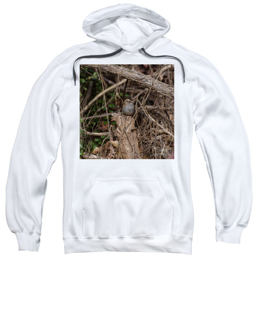 Bird Sweatshirt featuring the photograph Immature White-throated Sparrow by Donna Brown