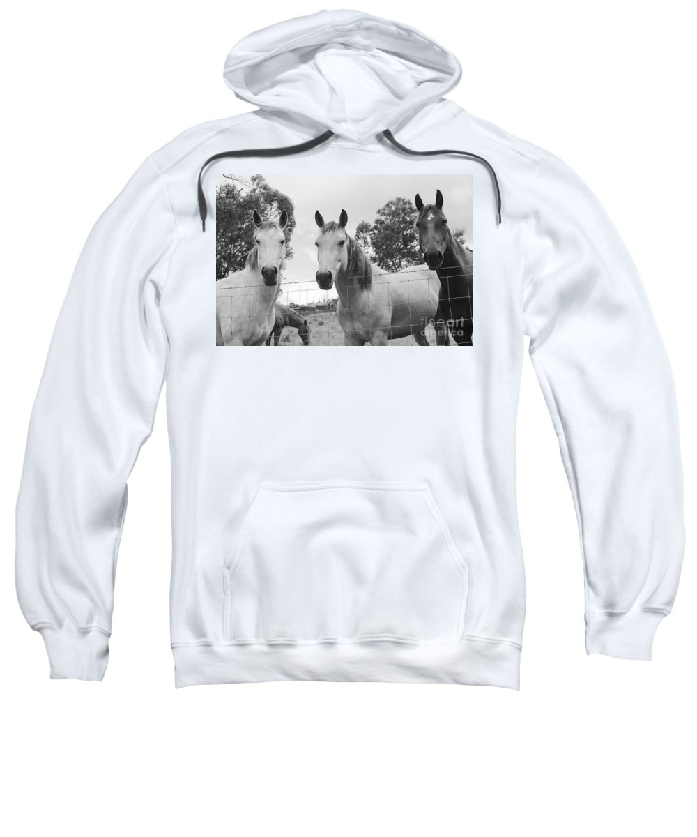 Horses Sweatshirt featuring the photograph In The Open Air . . . by Sharon Mau