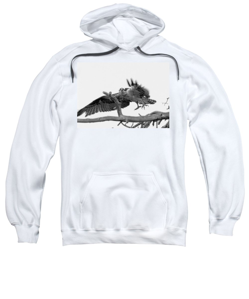 Osprey Sweatshirt featuring the photograph I've Got My Eyes On You by Donna Blackhall
