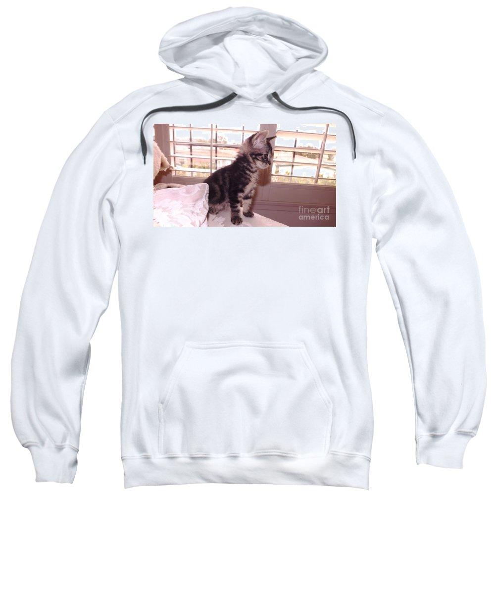 Kitten Sweatshirt featuring the photograph Kitten On Alert by Jussta Jussta